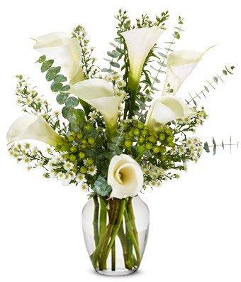 Sympathy Calla Lilies (Free Vase)