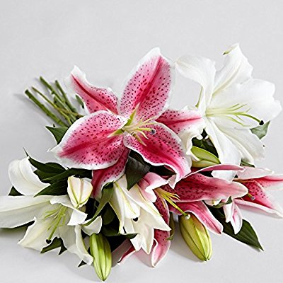4 Count Multi-Colored Thinking of You w/Free Clear Vase